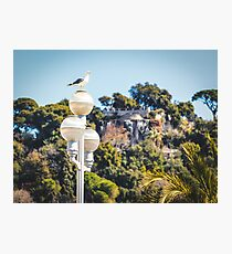 Seagull in the center of Nice, France Photographic Print