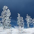frosty pines by sue shaw