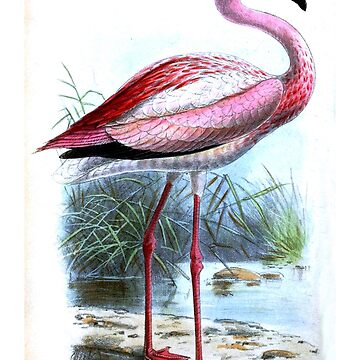John Gerrard Keulemans-James's flamingo by planetterra