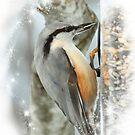 Birds by Bente Agerup