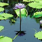 Lilypads with Purple Flowers by Susan Russell