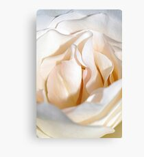 Closeup Rose Canvas Print