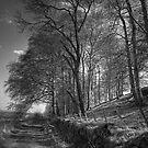 Along Platt Hill Lane - B&W by Tom Gomez