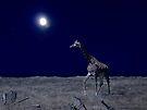 Walk at Midnight by Veronica Schultz