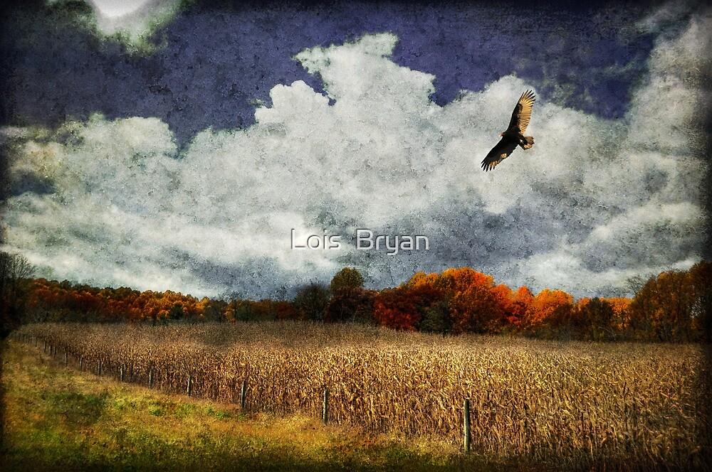 Circling by Lois  Bryan
