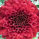 Dahlia in Red by AuntDot