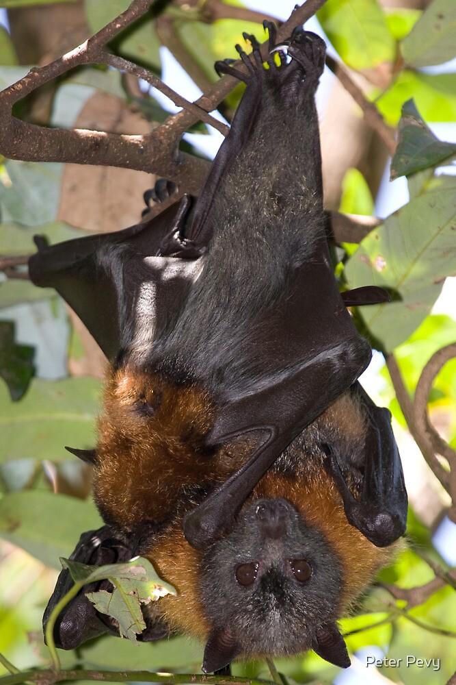 Batty Mum by Peter Pevy