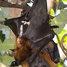 Batty Mum by Peter Pevy
