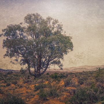 Solitary by DVJPhotography