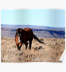 Honor, South Steens Mustang Poster