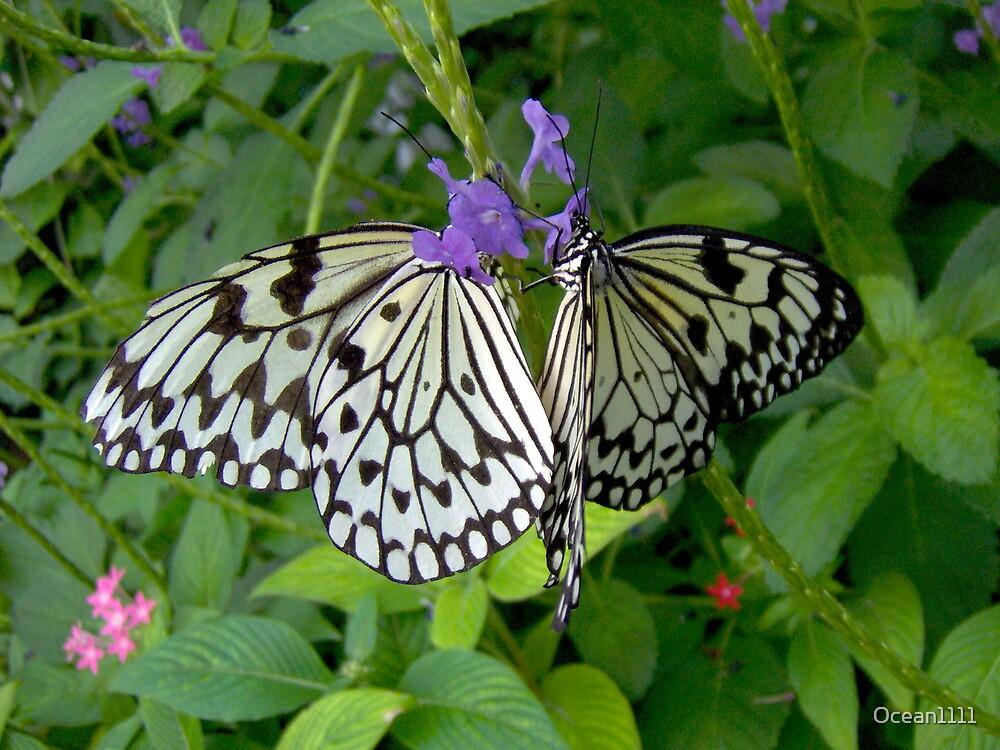 2 Paper Kite butterflies by Ocean1111