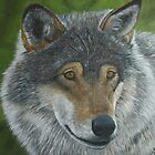 Gray Wolf by paintersid