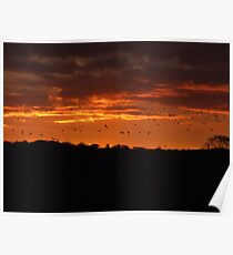 Birds in a Fire Sky Poster