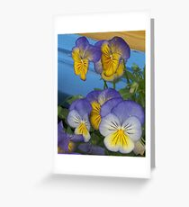 Pretty faces in a flowerbox Greeting Card