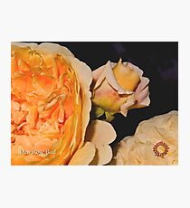 D1G1TAL-M00DZ ~ FLORAL ~ New Rose Bud  by tasmanianartist 131218 Photographic Print