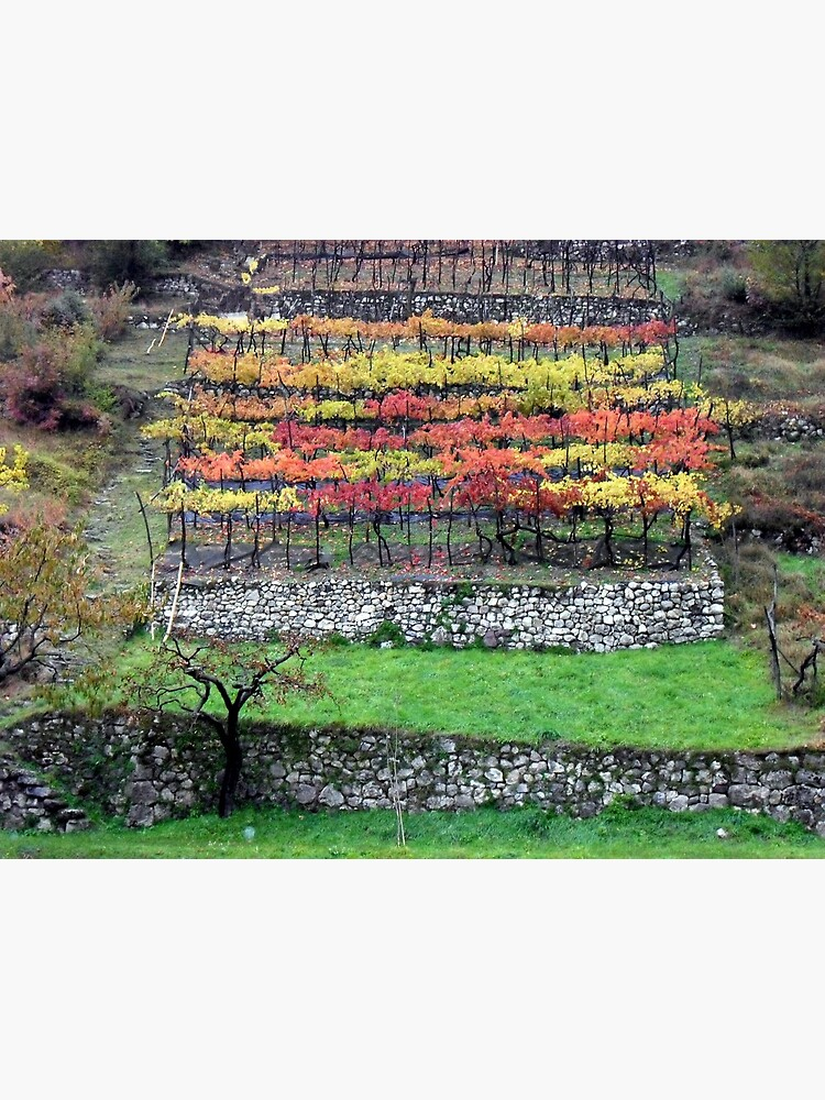 Vineyard in the southern Dolomites de iandsmith