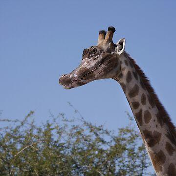 Gatoraffe or Girafator by GolemAura