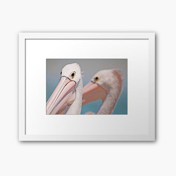 Tuross Pelicans Framed Art Print