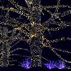 Christmas Trees by cclaude