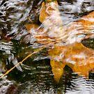 Leaf under water by Barry Buchholtz