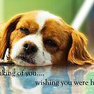 Thinking of you... by JuliaKHarwood