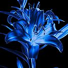 Blue Lily by Claire  Farley