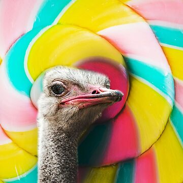 Ostrich Lost in spiral swirl by biibee