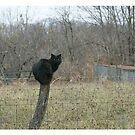 Black Cat by danabee
