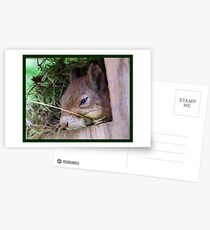 How About Taking A Nap Postcards