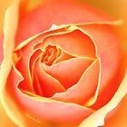 Melting Rose ~ a Flood of Color by SummerJade