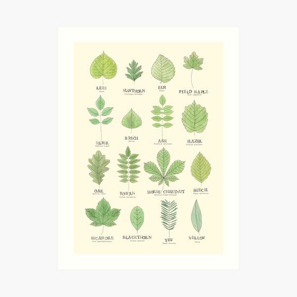 Leaf ID Chart Art Print