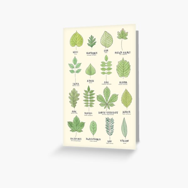 Leaf ID Chart Greeting Card