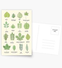Leaf ID Chart Postcards