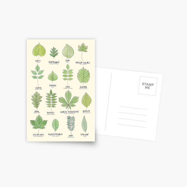Leaf ID Chart Postcard