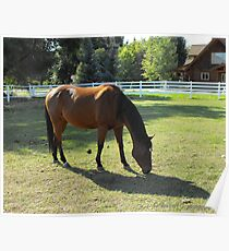 Huntsville Horse ~ Huntsville, Utah Poster