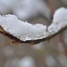 Iced Branch by loz788
