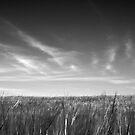 Field by FraserJ