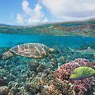 Turtle on coral reef by Dam - www.seaphotoart.com