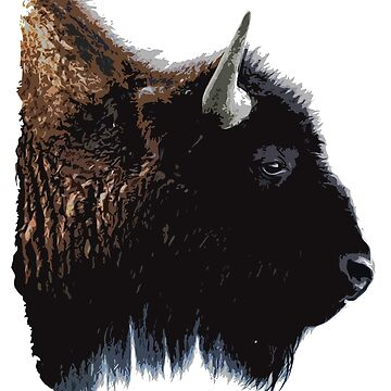 Bison - Buffalo by Port-Stevens