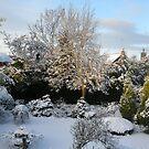 Winter Garden by Harri