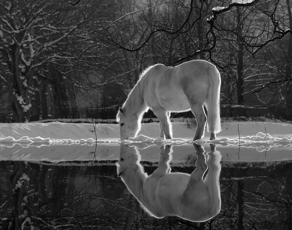 Winter Reflections by DianeRocks