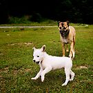 Hunde - Straßenhunde von laura-S