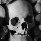 The Bone Collection by Dave Godden