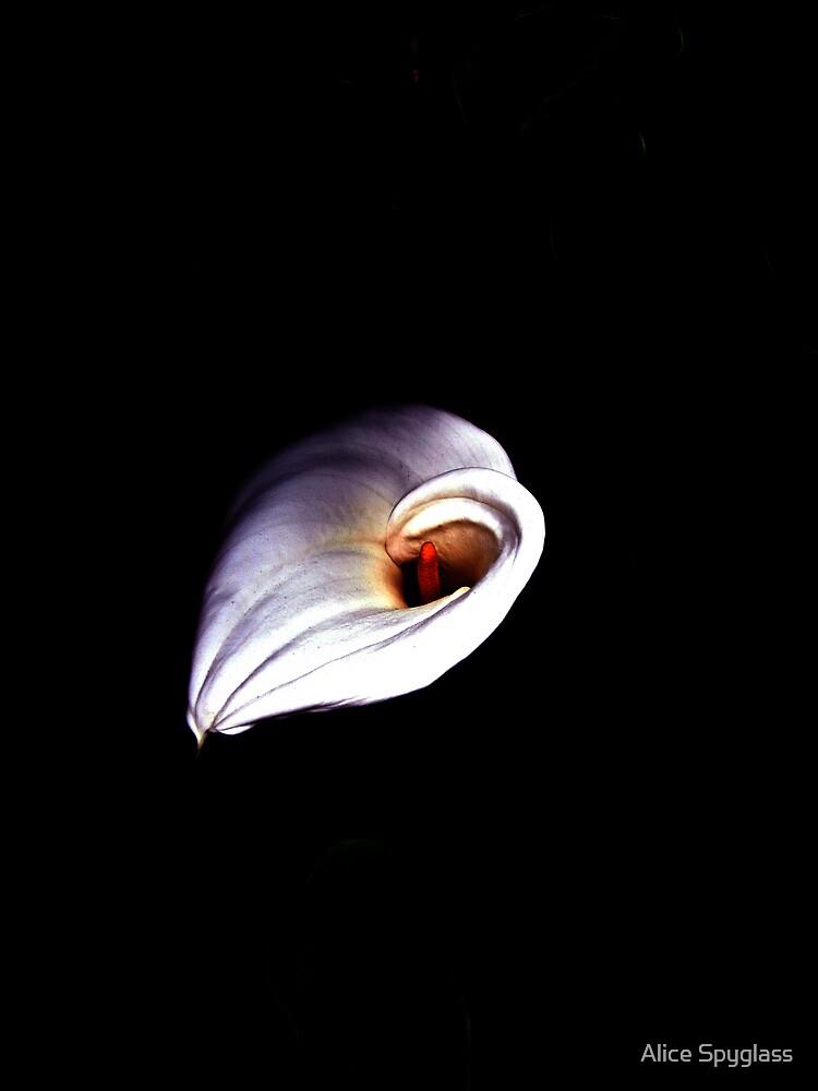 Lone Lily by Alice Spyglass