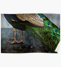Peacock Feet Poster