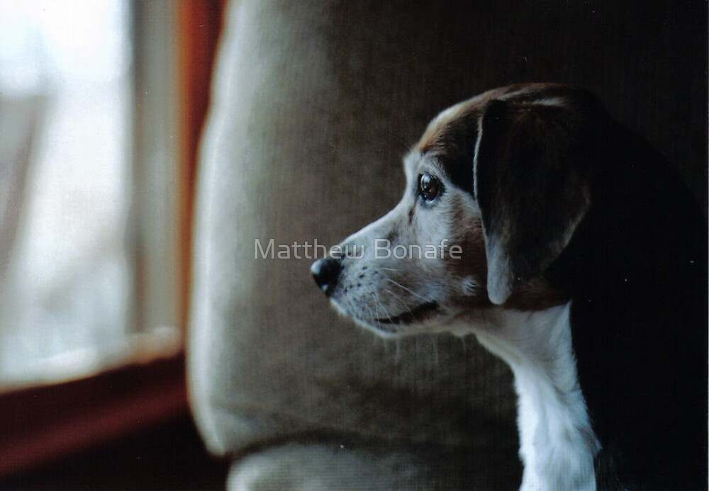Sprocket through the Window by Matthew Bonafe