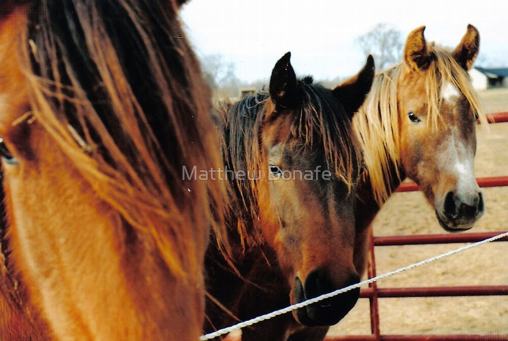The Three Horses by Matthew Bonafe