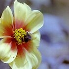 Bee Polinating a Yellow Flower (Film) by lepoflex