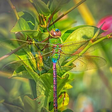 Dragonfly in Green Garden by WigOutlet