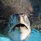 Green Sea Turtle by D R Moore